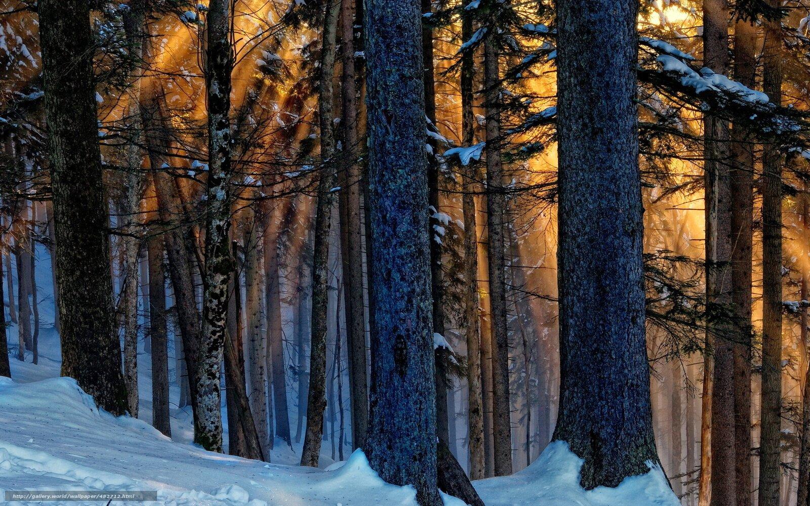 vava - Какую еду можно найти в зимнем лесу